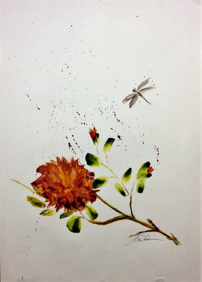 Odonata au jardin