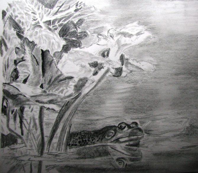 Grenouille dans mon étang